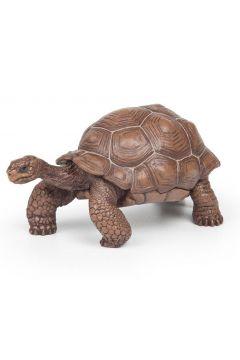 Żółw z Galapagos