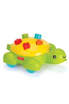 Żółw edukacyjny